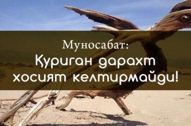 Муносабат: Қуриган дарахт хосият келтирмайди!