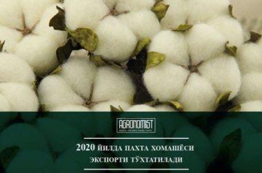 2020 йилда пахта хомашёси экспорти тўхтатилади