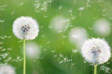 Баҳор ва аллергия