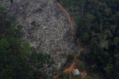 Бразилияда сўнгги 12 йилда чўлланиш энг юқори даражага етди